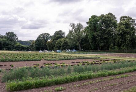 Køkkenhave og camp